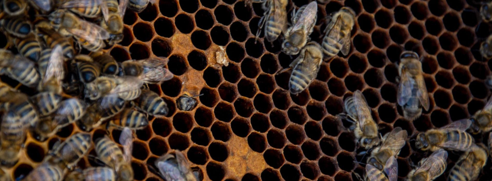 Darmowe szkolenia z zakresu pszczelarstwa